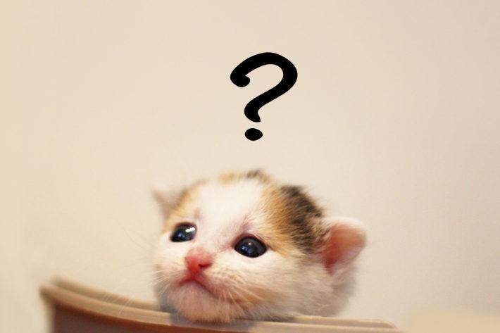 悩んでいる猫