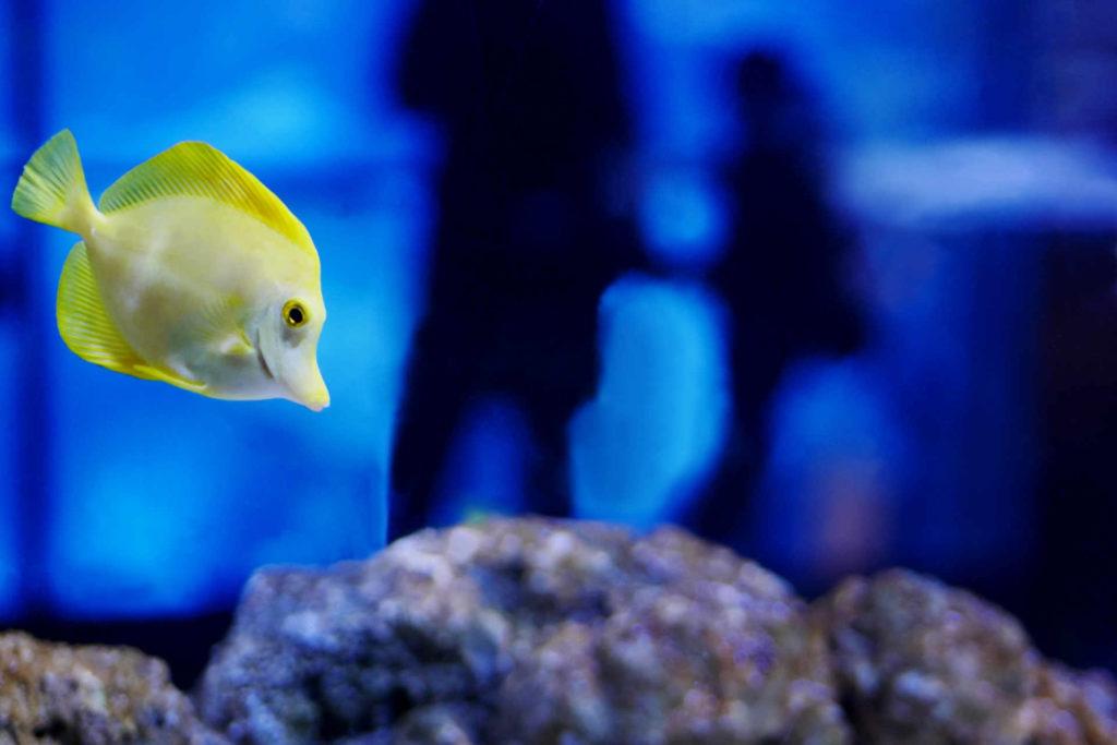 水族館の水槽で泳いでいる魚