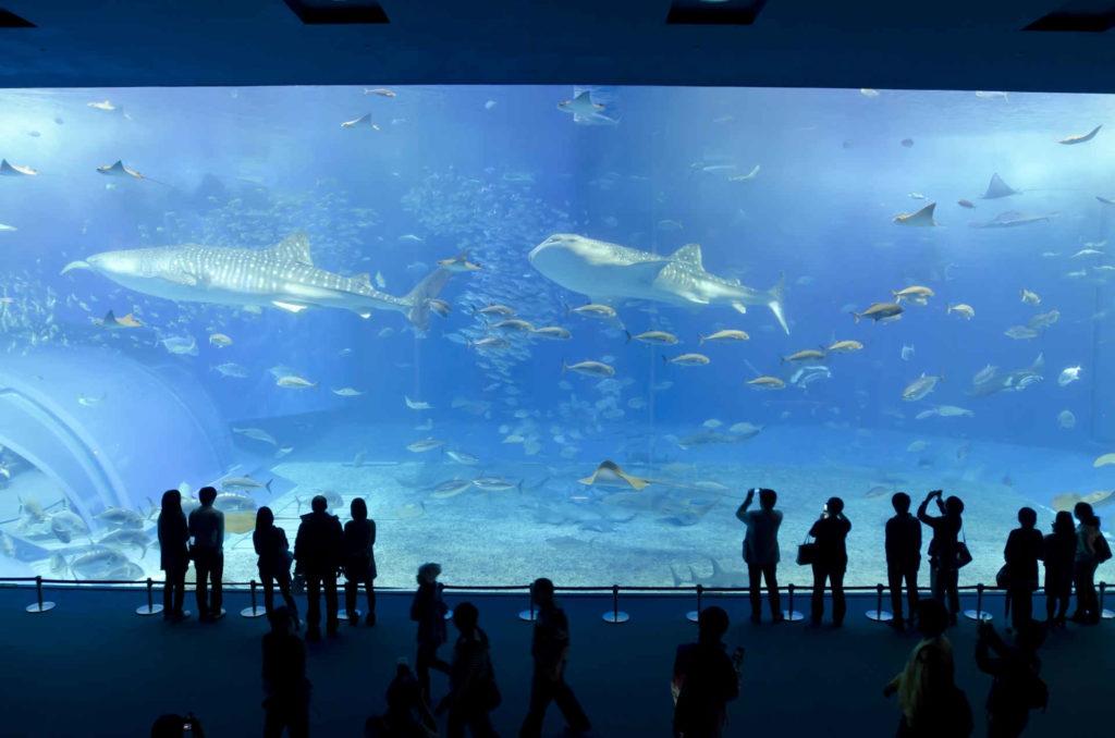 水族館で泳ぐ魚を鑑賞している男女