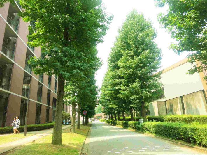 大学キャンパス内の風景