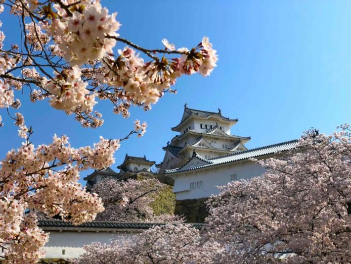 お城の外観と桜の木