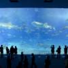 水族館コンに行った感想・評判、水族館婚活の現実を紹介
